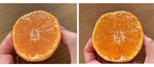 瑞々しい断面がおいしそうなオレンジ。左が写真で右がイラスト