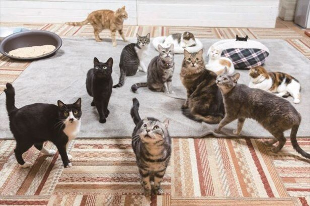 2008年に横浜初のネコカフェとしてオープンした「猫カフェ れおん」(神奈川・石川町)