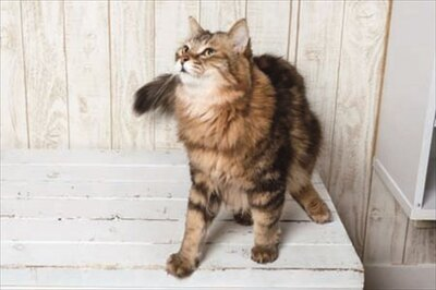 【写真を見る】「猫カフェ れおん」のコジロウ君
