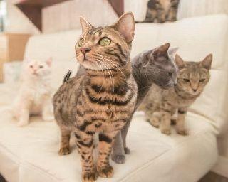 入店した瞬間から、ネコたちの視線がコチラに!