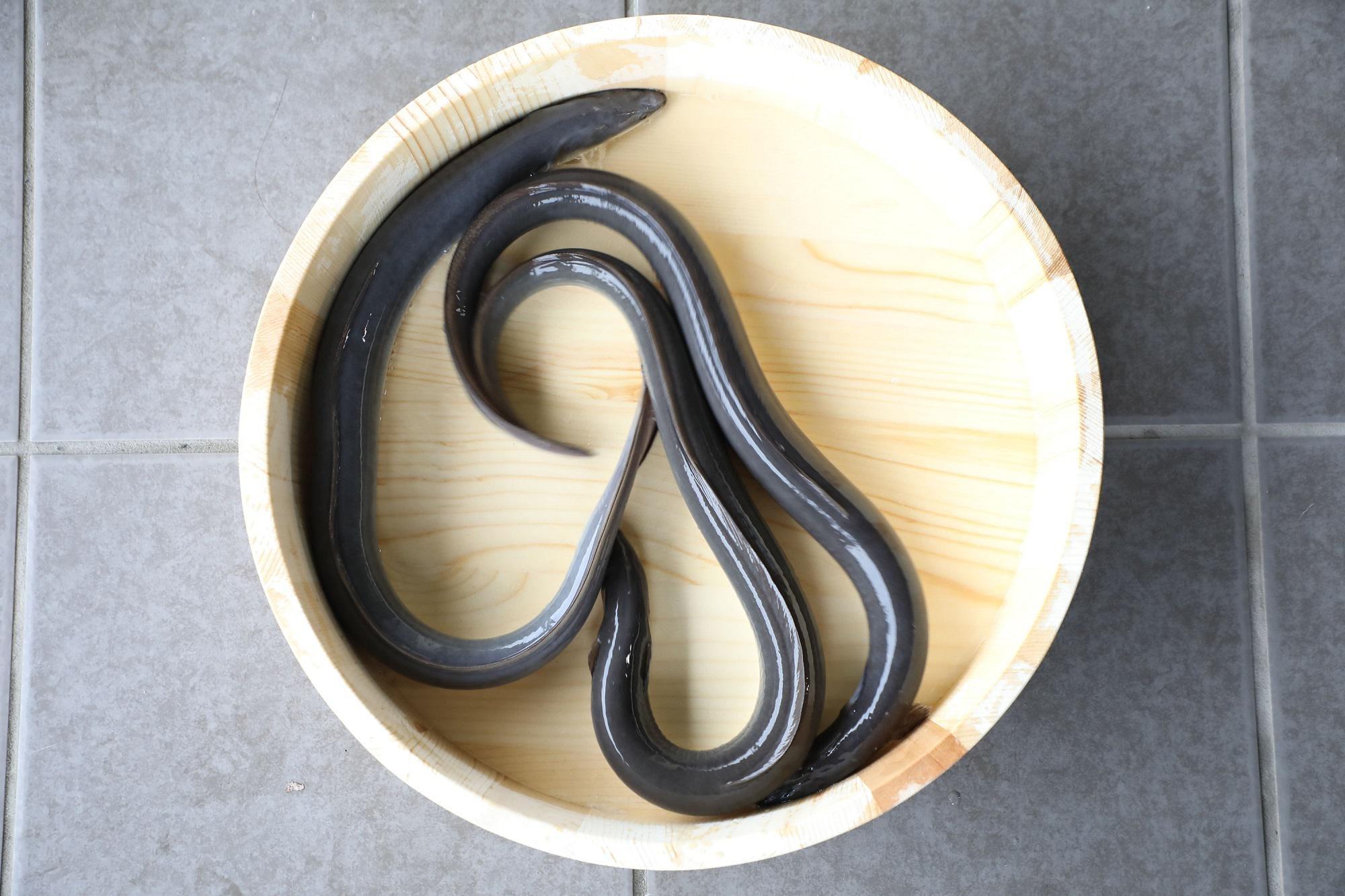 """中田英寿がシェアしたい""""日本の新たな価値""""「徹底的なこだわりで""""天然""""を超える旨さ『横山さんの鰻』」"""