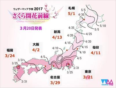 21日(火)、気象庁が東京の桜の開花を発表!