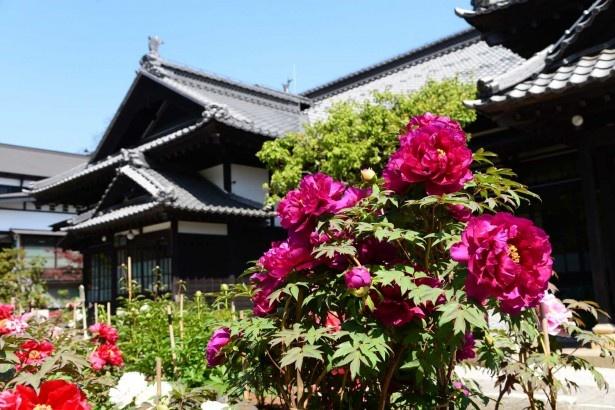 にしん御殿 小樽貴賓館 旧青山別邸/おたる水族館周辺の人気観光スポット。次に向かうのは……