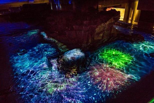 【写真】幻想的な花火のプロジェクションマッピングとペンギンプールがコラボした「ペンギン花火」