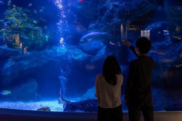 「東京スカイツリータウン(R)」内にある「すみだ水族館」