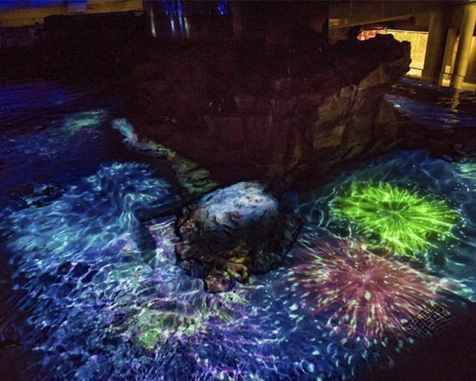 ペンギンと花火のコラボ!?すみだ水族館「夏の夜すい」で2021年は一味違う夏を満喫!