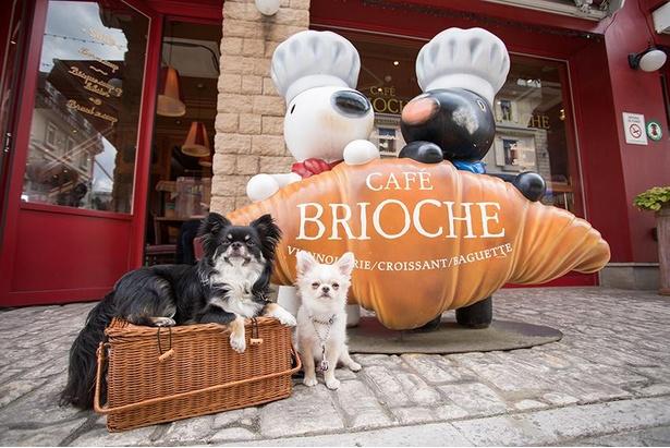 「カフェ ブリオッシュ」の看板前でパチリ!
