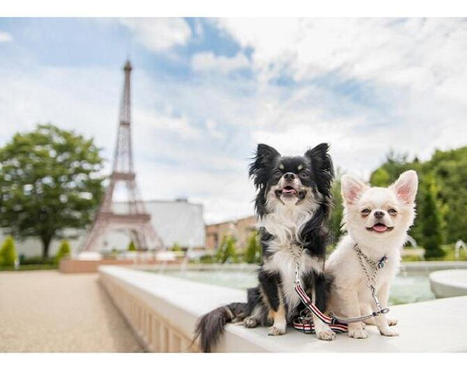 富士急ハイランドの「リサとガスパールタウン」で愛犬と最高の1日を!
