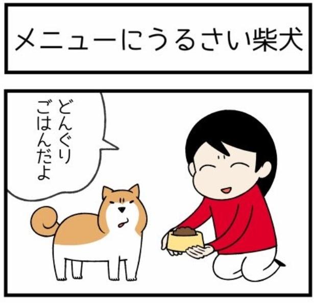 換毛期シリーズ「メニューにうるさい柴犬」1。続きを読むときは画像をクリック!