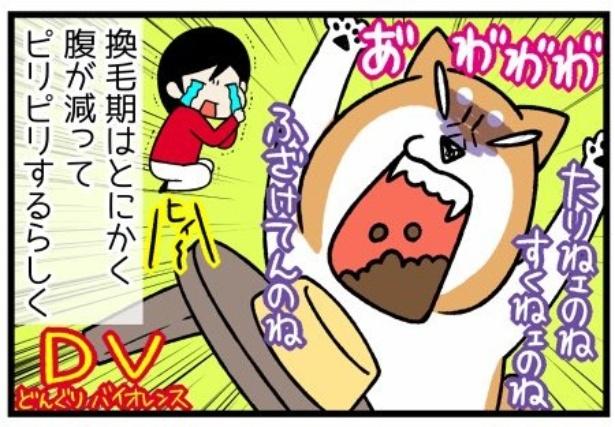換毛期シリーズ「メニューにうるさい柴犬」3。続きを読むときは画像をクリック!