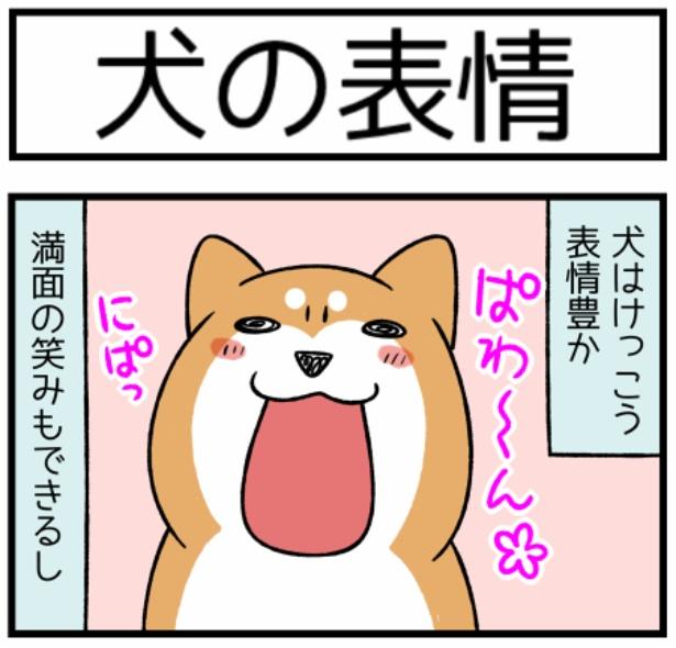 どんぐりの性格シリーズ「犬の表情」1。続きを読むときは画像をクリック!