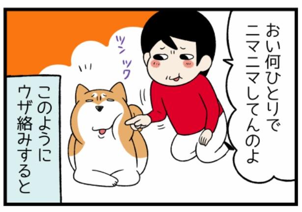 どんぐりの性格シリーズ「犬の表情」3。続きを読むときは画像をクリック!