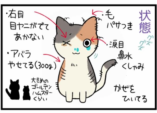 猫のたんぽぽシリーズ「出会い」2。続きを読むときは画像をクリック!