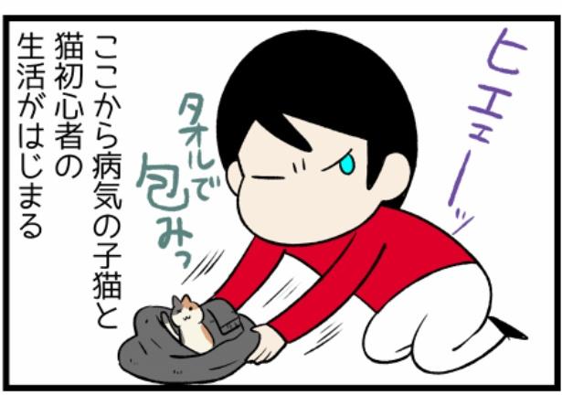 猫のたんぽぽシリーズ「出会い」3。続きを読むときは画像をクリック!