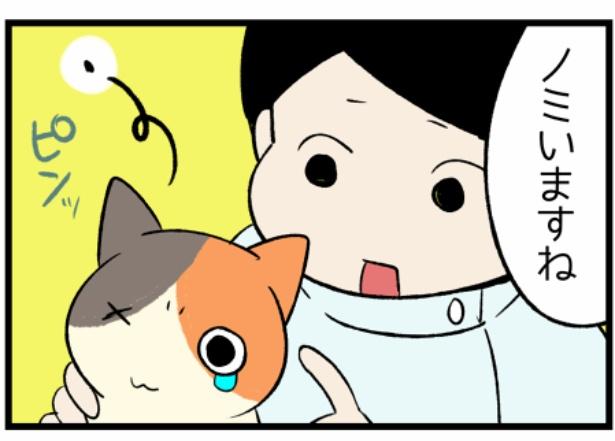猫のたんぽぽシリーズ「当日中の勧め」2。続きを読むときは画像をクリック!