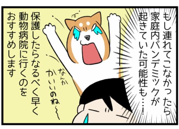 猫のたんぽぽシリーズ「当日中の勧め」5。続きを読むときは画像をクリック!
