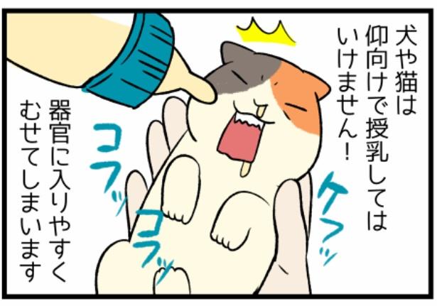 猫のたんぽぽシリーズ「犬猫の哺乳」2。続きを読むときは画像をクリック!