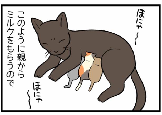 猫のたんぽぽシリーズ「犬猫の哺乳」3。続きを読むときは画像をクリック!