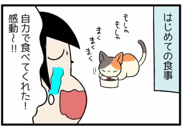 猫のたんぽぽシリーズ「嬉しかったはじめて」2。続きを読むときは画像をクリック!