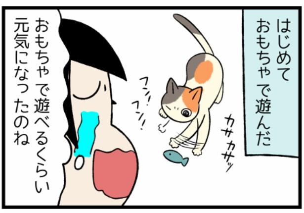 猫のたんぽぽシリーズ「嬉しかったはじめて」4。続きを読むときは画像をクリック!