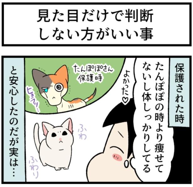 猫のすずらんシリーズ「見た目で判断しない方がいい事」1。続きを読むときは画像をクリック!