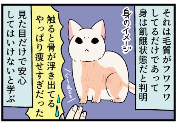 猫のすずらんシリーズ「見た目で判断しない方がいい事」2。続きを読むときは画像をクリック!