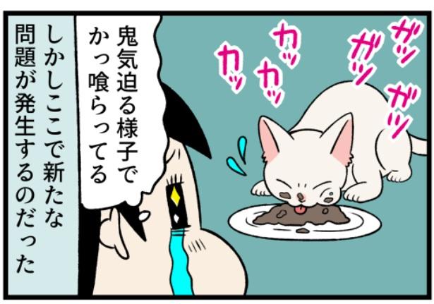猫のすずらんシリーズ「見た目で判断しない方がいい事」4。続きを読むときは画像をクリック!