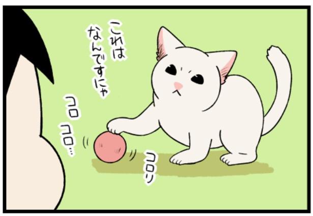 猫のすずらんシリーズ「生まれて初めて見るおもちゃなるもの」2。続きを読むときは画像をクリック!