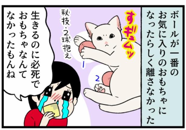 猫のすずらんシリーズ「生まれて初めて見るおもちゃなるもの」4。続きを読むときは画像をクリック!