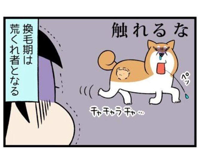 柴犬あるある?我が道を行く柴犬・どんぐりと2匹の拾い猫のコミックエッセイがかわいくてためになる!