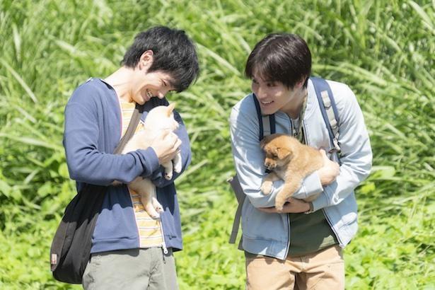 映画『犬部!』場面写真