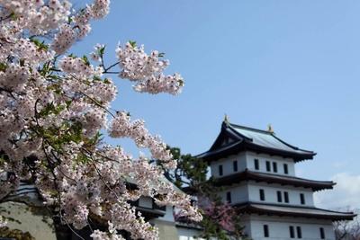 松前公園/松前城と桜の景色