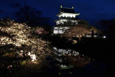 松前公園/夜桜のようす