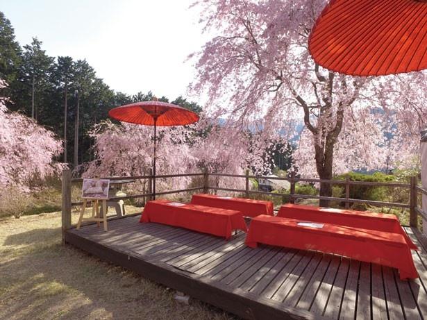 「天空レストラン」は、天空の庭にある茶店。目の前に広がる桜を眺めながらゆっくりと休憩/高見の郷