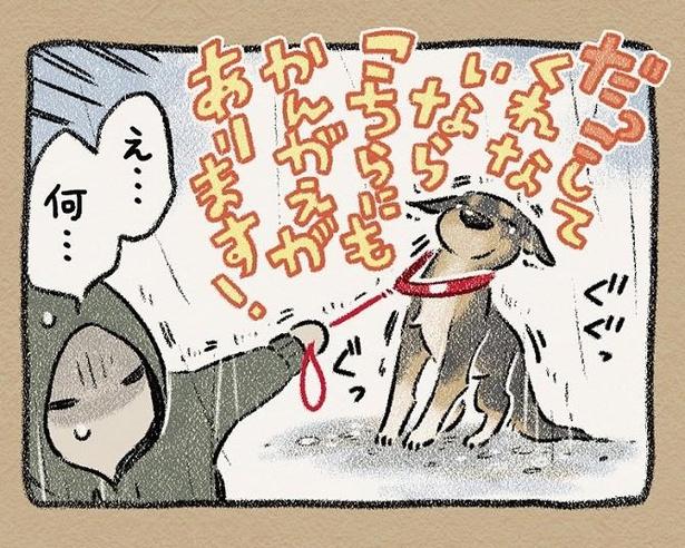 雨の日の散歩にも犬の性格が出る?