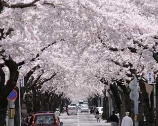 函館公園。噴水の奥にはミニ遊園地も。見逃せない桜名所はこのほか……