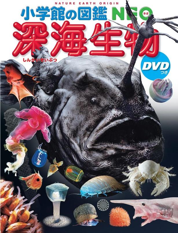 「今年の夏に『小学館の図鑑NEO 深海生物』という図鑑を作ったところ、驚くほどの大人気でした。ぜひこの『深海生物』をテーマにしたハッピーセットの図鑑を作ってみたいです」と北川さん