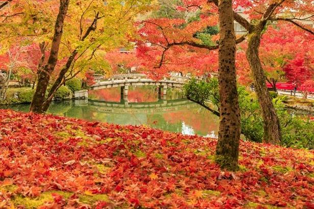 【写真】古今和歌集でもモミジの名所として詠われた永観堂の紅葉