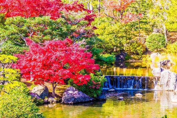 紅葉した樹と、それ以外の植物とのコントラストを楽しむのも一興
