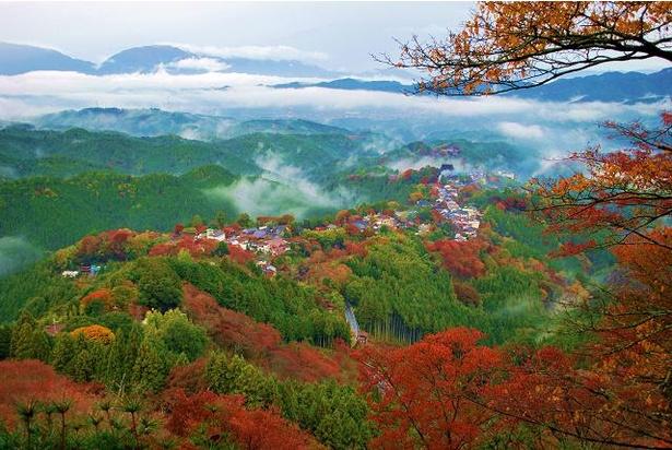 雲をも見下ろす絶景に紅葉が加わる