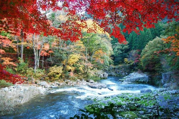清らかな渓流を紅葉が彩る