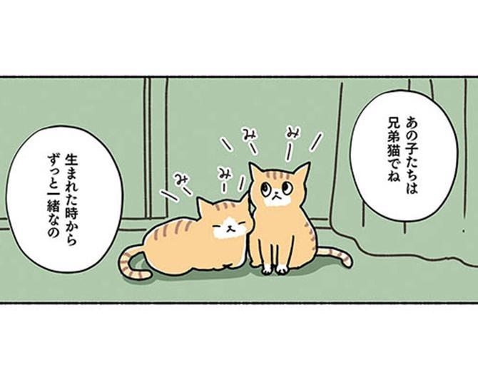 【漫画】兄弟猫は可愛いけれど、いきなり2匹も飼えるのか…そんな風に悩んでいたとき、ついに運命の出会いが/ねこ活はじめました かわいい!愛しい!だから知っておきたい保護猫のトリセツ