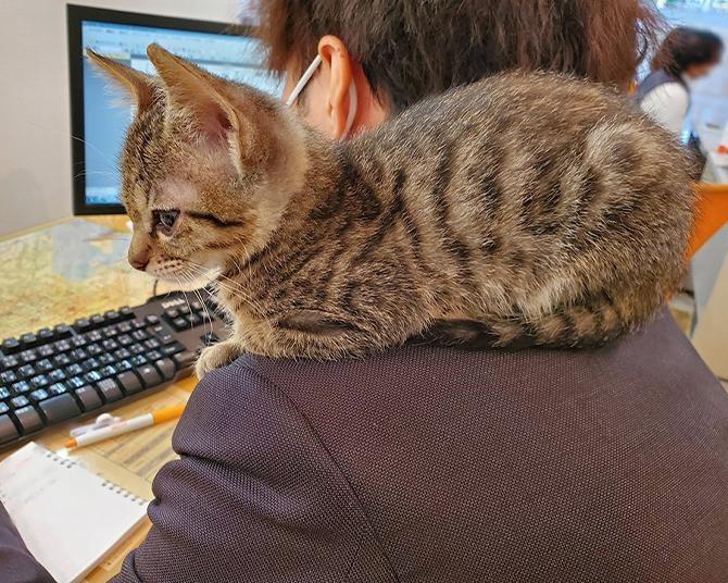 【猫写真集】不動産会社に出勤!?するにゃんこたちのお仕事姿まとめ