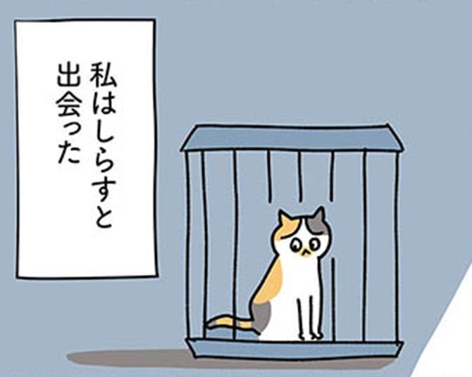 【漫画】ついに愛護センターで保護猫の募集が!迷わず子猫に応募しようとしたけれど…/ねこ活はじめました かわいい!愛しい!だから知っておきたい保護猫のトリセツ