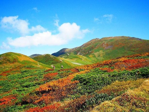 赤と緑が散りばめられた山肌を近くで見ることができる