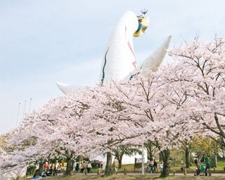 太陽の塔をソメイヨシノが囲む絶景が。中央口からお祭り広場へと進む道の途中には、塔の正面と美しい桜を併せて観賞できるスポットも万博記念公園