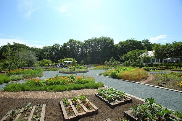 ファームレストラン ヴィーズ/見て美しく。食べて美味しい野菜と花の菜園。この菜園の食材を利用している