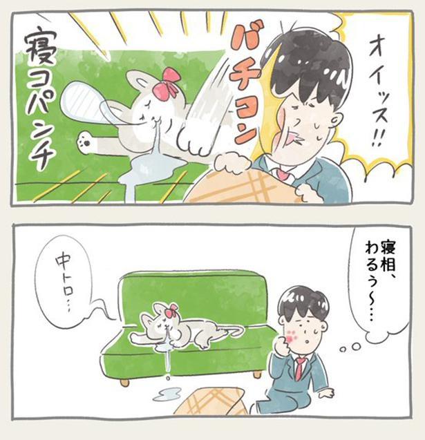 ニャン子ちゃん_6-2