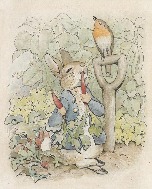 「ピーターラビットのおはなし」挿絵用の原画