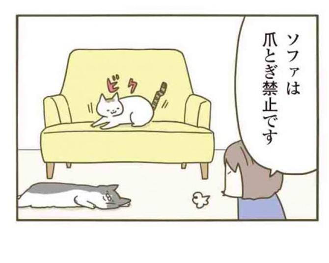 【漫画】「チャラにならないからね」ソファで爪とぎした猫を叱ると、誤魔化すためにとある行動をし始めて…/うちの猫がまた変なことしてる。